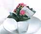 A great idea form the Flowers & Plants Association - kalanchoes in silver pots make a cute place setting that your guests can take home!